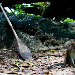 Palawan - Underground River Monkey